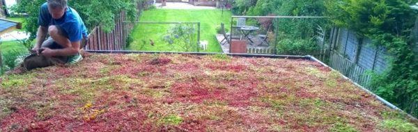 Green Roof finish